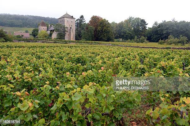 LEMETAYER Picture taken on September 22 2012 shows the chateau GevreyChambertin and some of its wineyard Eric Rousseau the winemaker of nearby...