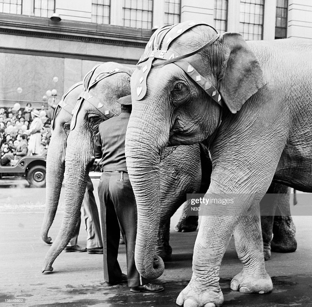 a vintage look at the macy u0027s parade photo album getty images