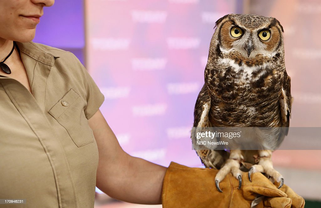 An owl appears on NBC News' 'Today' show --