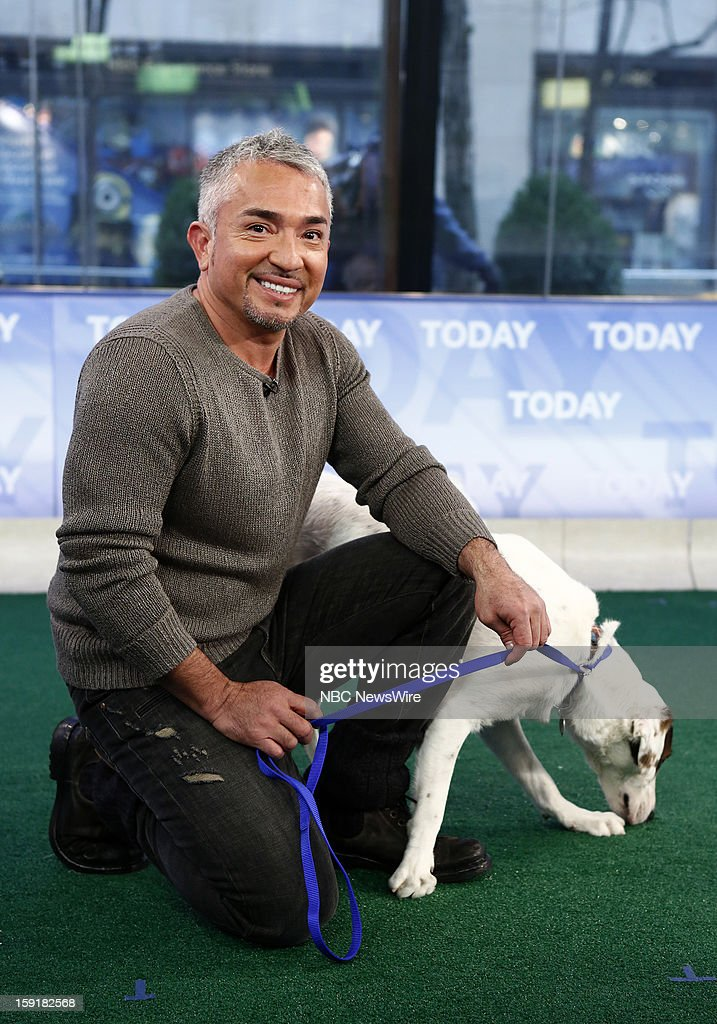 Cesar Millan appears on NBC News' 'Today' show --