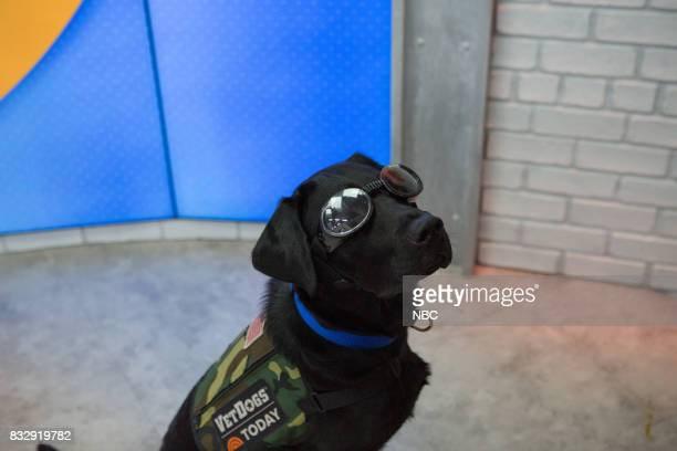 Charlie the Today Show Puppy on Tuesday August 15 2017