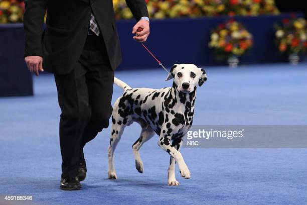 Dogs from the 2014 National Dog Show presented by Purina