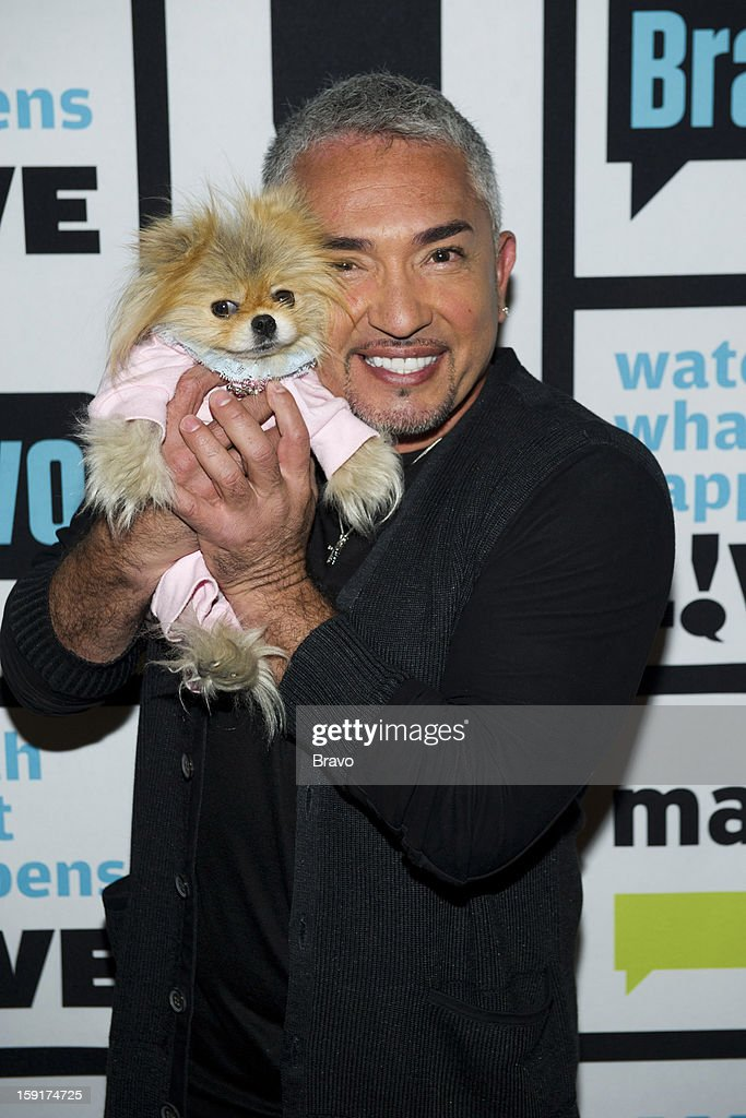 Giggy the Pomeranian, Cesar Millan -- Photo by: Charles Sykes/Bravo/NBCU Photo Bank via Getty Images