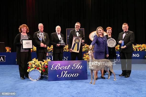 Greyhound named Gia Best in Show Winner Rindi Gaudet