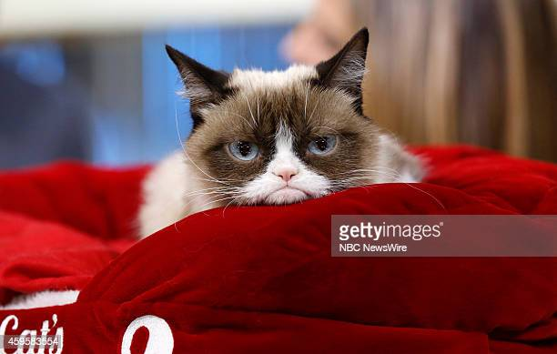 Grumpy Cat appears on NBC News' 'Today' show
