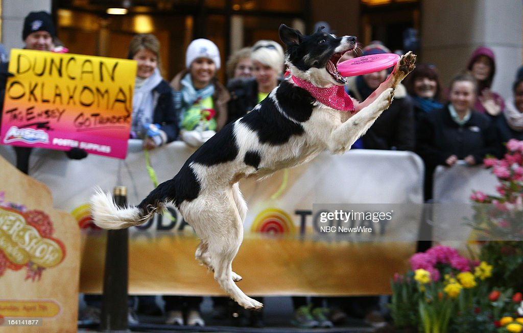 The Flying Houndz appear on NBC News' 'Today' show on March 20, 2013 --