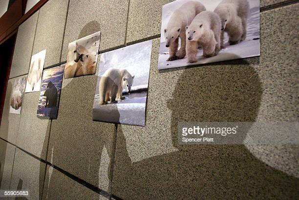 Pictures of polar bears hang at a news conference at the Central Park Zoo October 12 2005 in New York City Conservation groups including Greenpeace...