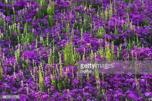 sortland Moss