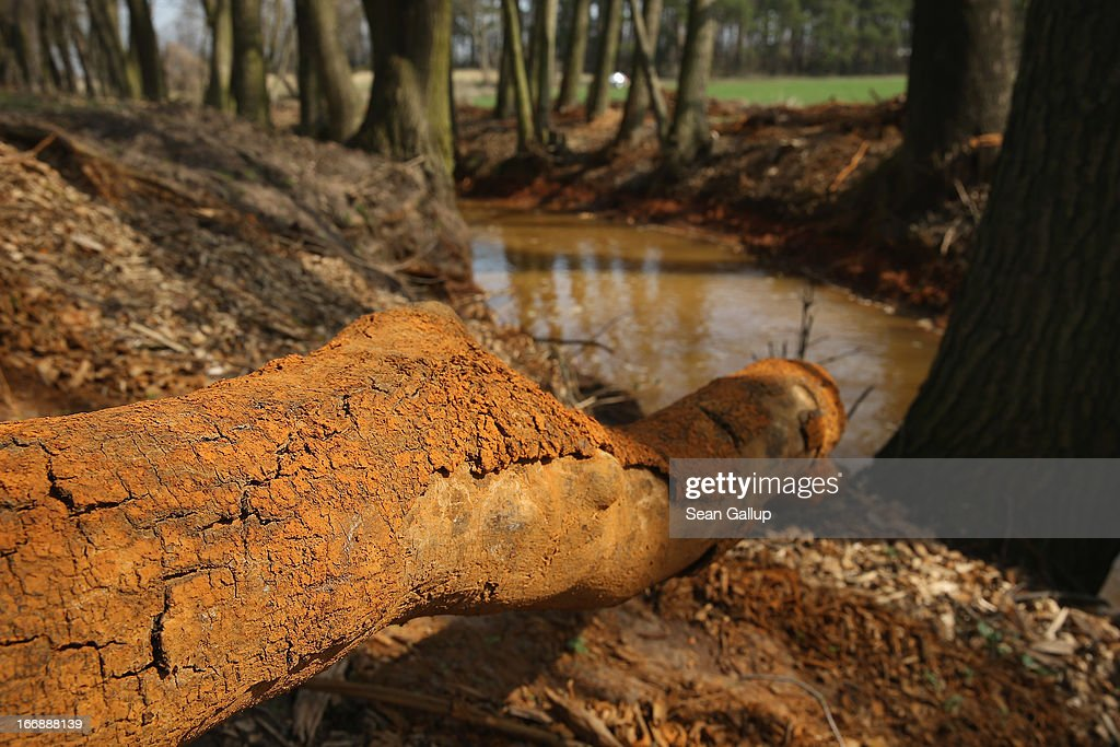 A piece of a tree pulled by workers out of the Wudritz creek lies covered in orange iron sediment next to the creek in the Spreewald region on April 17, 2013 near Luebbenau, Germany. The Wudritz is heavily burdened with iron from the nearby former Schlabendorf open pit coal mine, which has since been turned into a lake called the Schlabendorfer See. Many creeks and small rivers that feed the Spree River have turned a rich orange or brown, sometimes even red, due to the sediments flowing from several former open pit coal mines. The Spreewald is a popular tourist destination known for its network of canals and local tour operators fear the sediment will turn the waters there orange as well, which could seriously impact the tourist seasons. Though the iron sediment is not poisonous, some local farmers claim they have been forced to filter the water they use to irrigate their fields, and many people report the disappearance of fish and other fauna.