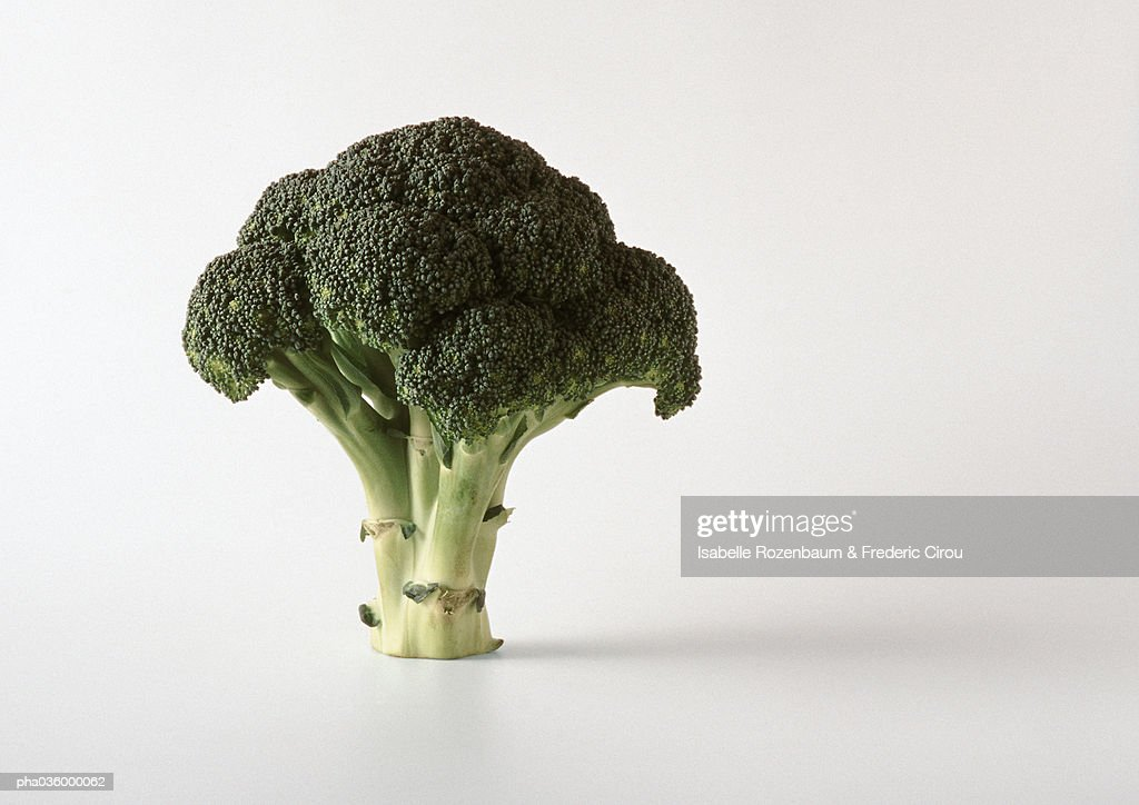 Piece of broccoli, standing, white background : Stock Photo