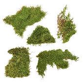 piece of green moss