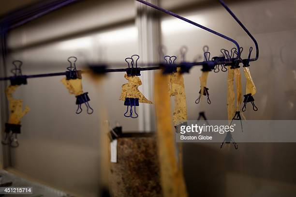 Pieces of adhesive tape salvaged from bomb sites in Afghanistan hang from a coat hanger at a Europeanled forensic lab in Kabul Cuttingedge forensic...