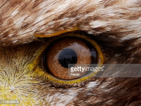 Piercing close-up view of brown American eagle eye