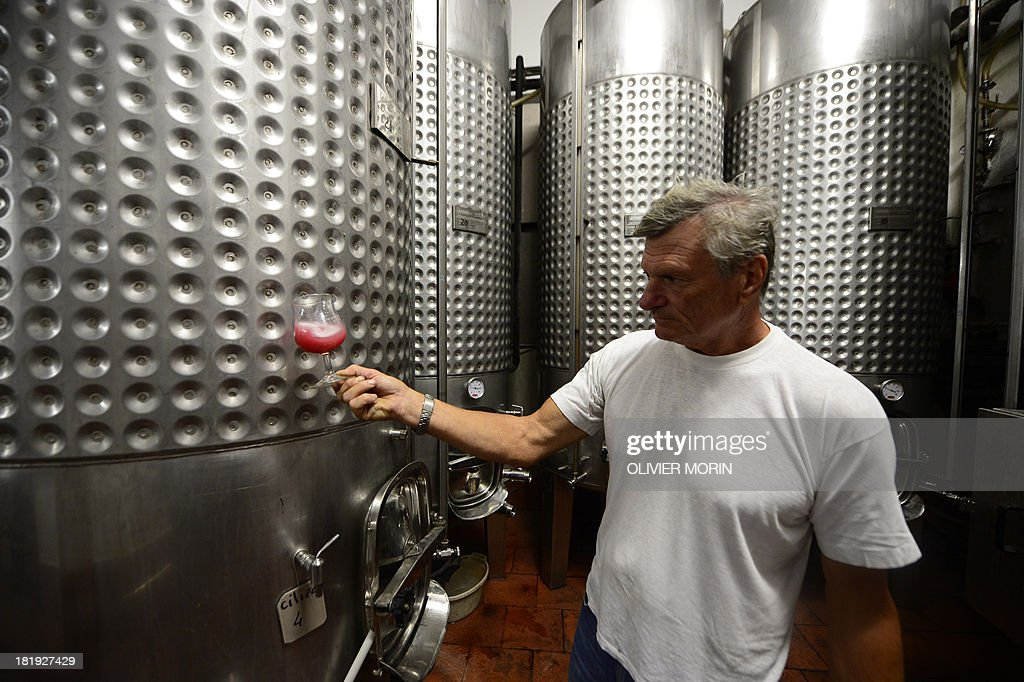 Pierluigi Lugano, an Abissi wine maker checks the colour of a recent grape harvest on September 25, 2013 in Chiavari. Pierluigi Lugano is experimenting by storing his wine three to four years in the sea at a depth of 60 metres and some 3 kilometres offshore, where the water temperature remains constant under 6 bars of pressure with a slight deepwater current. MORIN