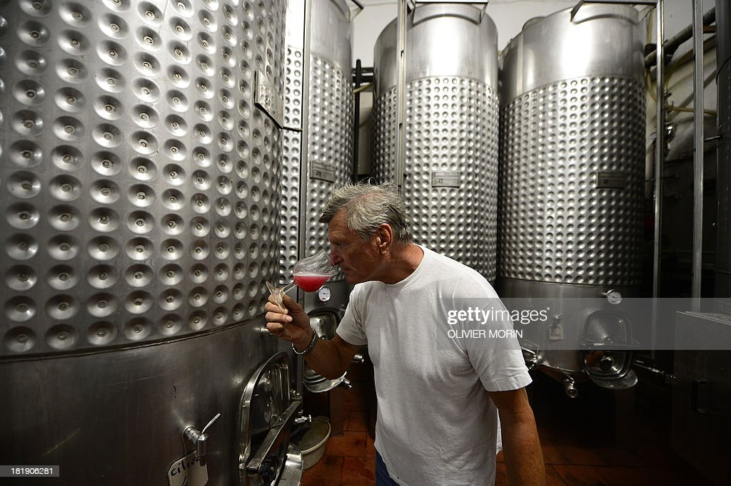 Pierluigi Lugano, an Abissi wine maker checks the flavour of a recent grape harvest on September 25, 2013 in Chiavari. Pierluigi Lugano is experimenting by storing his wine three to four years in the sea at a depth of 60 metres and some 3 kilometres offshore, where the water temperature remains constant under 6 bars of pressure with a slight deepwater current.