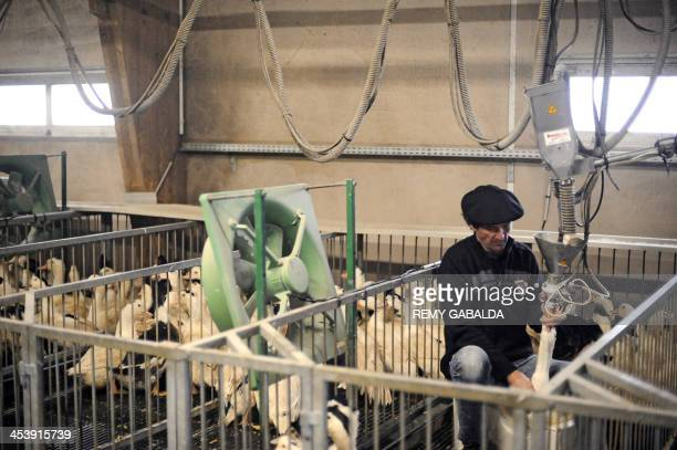 Pierre Perez owner with his brother Philippe of a foie gras manufactory forcefeeds a duck on November 21 2013 in SaintMichel eastern France AFP PHOTO...