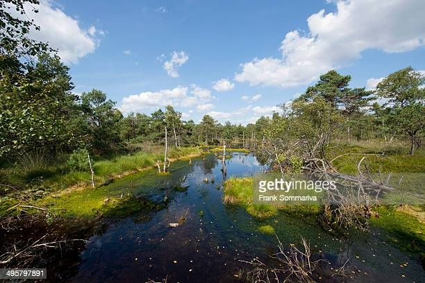 Pietzmoor, Luneburg Heath Nature Reserve, Schneverdingen, Lower Saxony, Germany