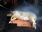 Pig slaughter, the pig it's washed