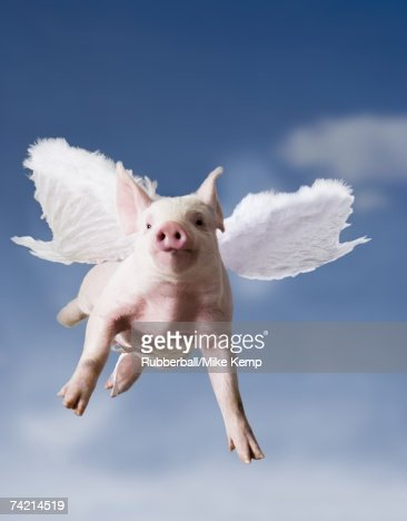 When Pigs Fly Stock Photos and Pictures | Getty Images