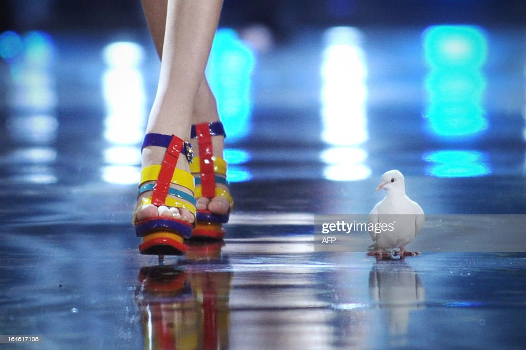 A pigeion is seen on stage as a model showcases a creation from Chinese designer Mark Cheung during the G VILL Mark Cheung shoes Collection as part of the China Fashion Week 2013 in Beijing on March 25, 2013. China Fashion Week runs from March 24 until March 30.