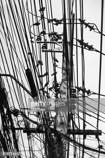 pigeon birds hanging on transmission tower and wires : Stock-Foto