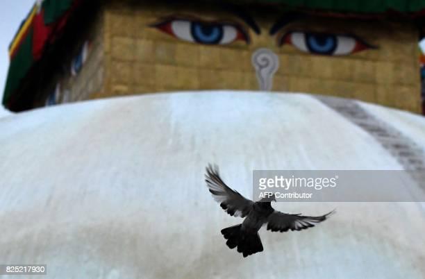 A pigeon flies Boudhanath Stupa on the outskirts of the Nepalese capital Kathmandu on August 1 2017 Boudhanath Stupa was among hundreds of historic...