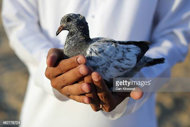 A pigeon is ready to be released for a falcon to chase on February 3 2015 in Abu Dhabi United Arab Emirates Traditionally a way of obtaining food...