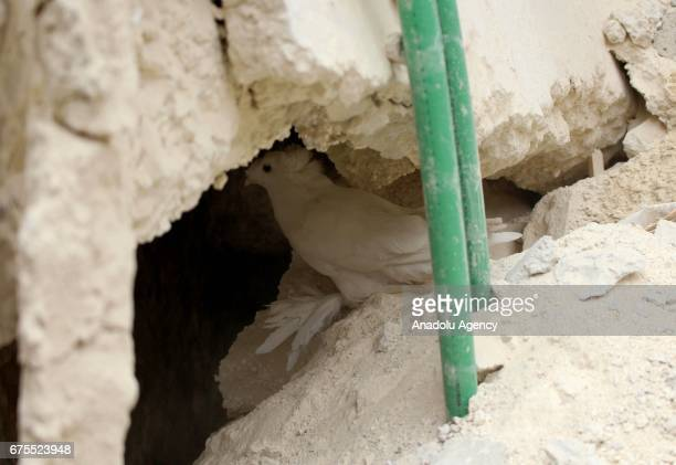 A pigeon is seen between wreckage of collapsed Arbin hospital after Assad Regime's airstrike hit residential areas at the Arbin district of Eastern...