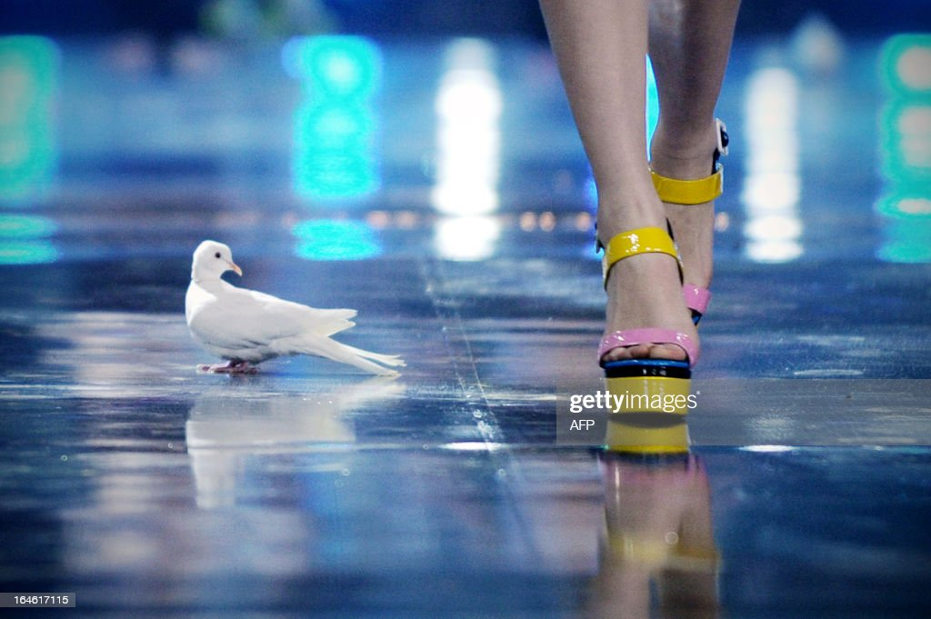 A pigeon is seen on stage as a model showcases a creation from Chinese designer Mark Cheung during the G VILL Mark Cheung shoes Collection as part of the China Fashion Week 2013 in Beijing on March 25, 2013. China Fashion Week runs from March 24 until March 30. AFP PHOTO / WANG ZHAO