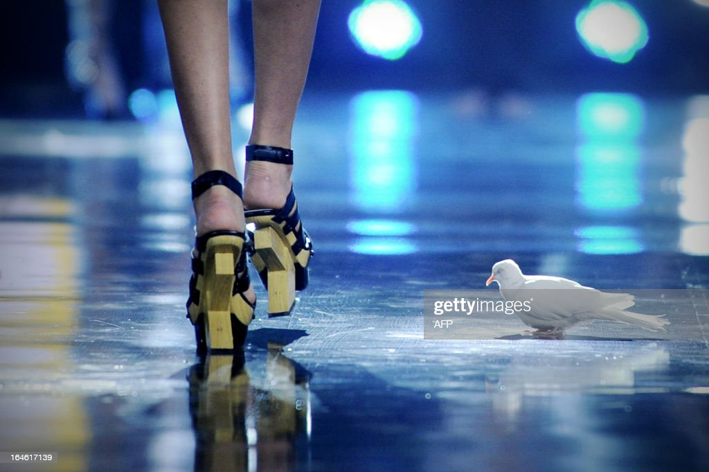 A pigeon is seen on stage as a model showcases a creation from Chinese designer Mark Cheung during the G VILL Mark Cheung shoes Collection as part of the China Fashion Week 2013 in Beijing on March 25, 2013. China Fashion Week runs from March 24 until March 30.