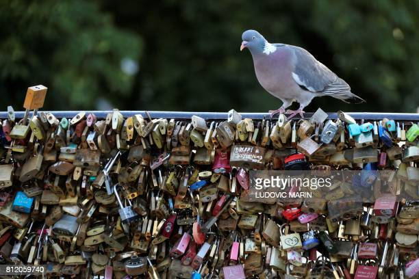 A pigeon rests on railings where padlocks symbolising 'ever lasting love' have been placed on the Pont Neuf bridge across the Seine river in Paris on...