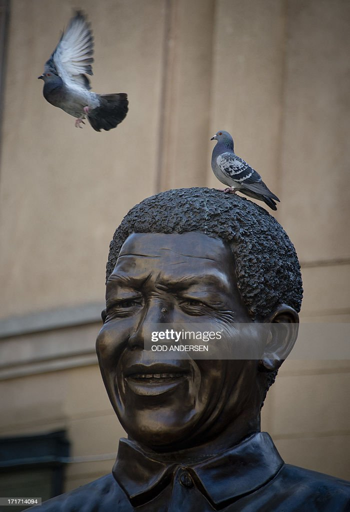 A pigeon takes off giant bronze statue of Nelson Mandela at Nelson Mandela square in the north Johannesburg suburb of Sandton on June 28, 2013. Mandela is receiving treatment at the Mediclinic heart hospital in Pretoria. Mandela's close family gathered yesterday at his rural homestead to discuss the failing health of the South African anti-apartheid icon who was fighting for his life in hospital. Messages of support poured in from around the world for the Nobel Peace Prize winner, who spent 27 years behind bars for his struggle under white minority rule and went on to become South Africa's first black president.