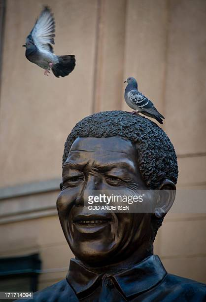 A pigeon takes off giant bronze statue of Nelson Mandela at Nelson Mandela square in the north Johannesburg suburb of Sandton on June 28 2013 Mandela...