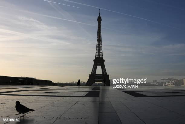 A pigeon walks on the trocadero plaza at sunrise in front of the Eiffel tower on april 6 in Paris / AFP PHOTO / LUDOVIC MARIN