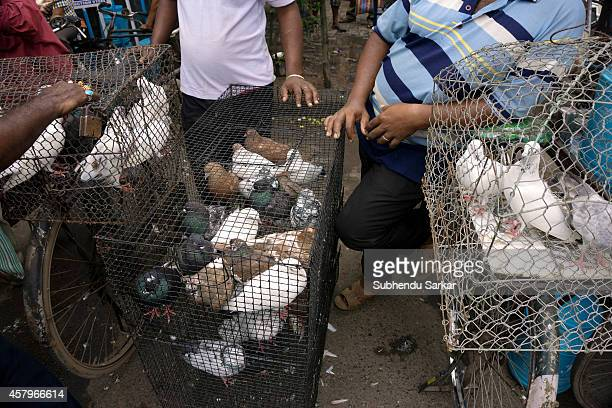 Pigeons are for sale at Kolkata pet market Kolkata pet market at Gallif street is a weekly market held on Sundays where many rare and common species...