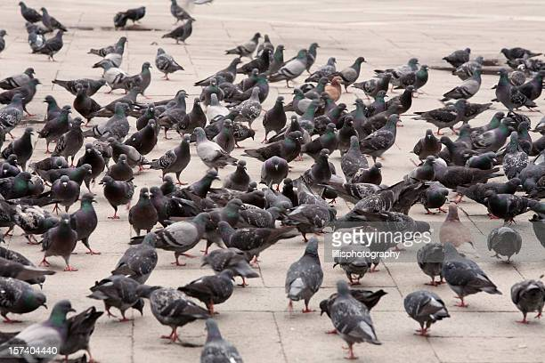Pigeons at Piazza San Marco in Venice