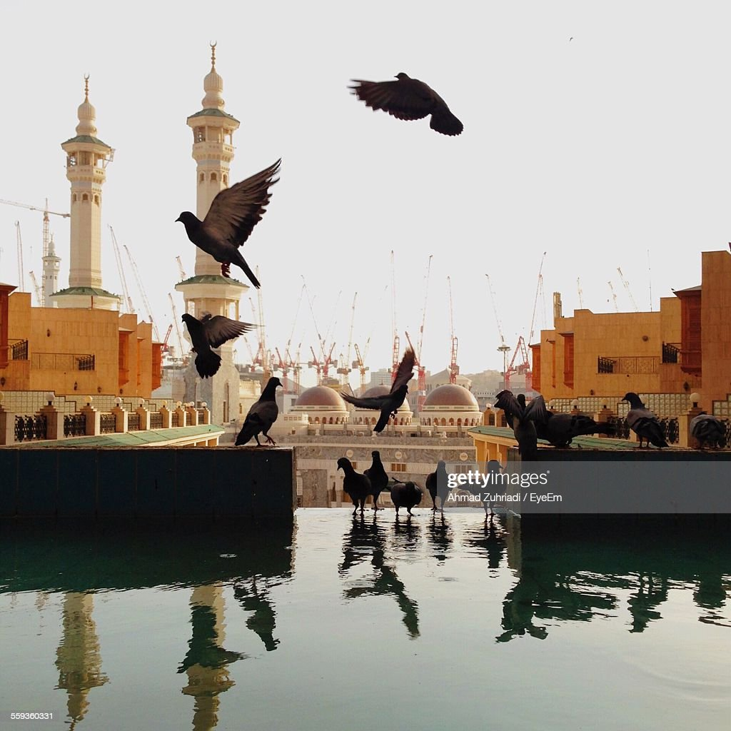 Pigeons At Pond By Mosque Against Clear Sky