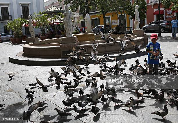 Pigeons fill a city square in Old San Juan as the Governor Alejandro Garcia Padilla prepares to address the island's residents in a televised...