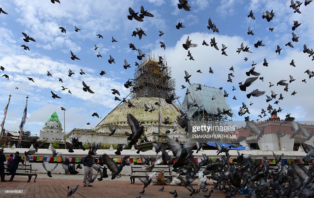 Pigeons fly around the Boudhanath Stupa in Kathmandu on August 23 2015 AFP PHOTO / Prakash MATHEMA