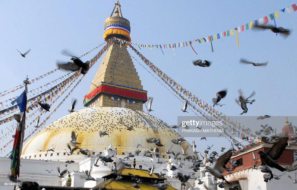 Pigeons fly around the Boudhanath Stupa in Kathmandu on March 10 2008 AFP PHOTO / Prakash MATHEMA