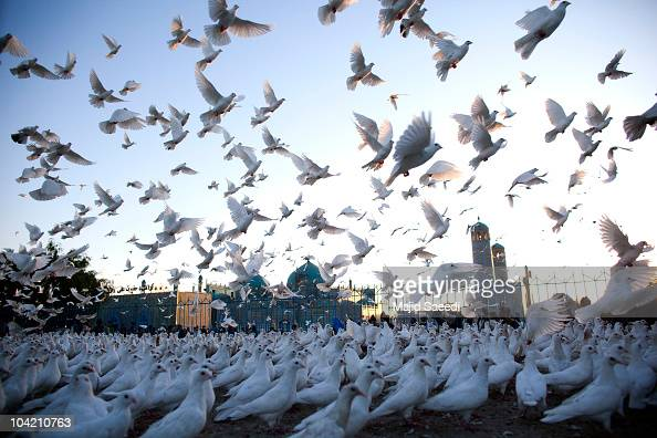 Pigeons fly at the Blue Mosque a day before the parliamentary election September 17 2010 in Mazaresharif Afghanistan Security is of gaining...