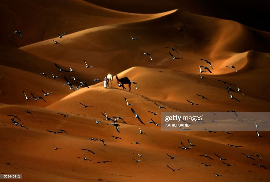 Pigeons fly over the Liwa desert, 250 kilometres west of the Gulf emirate of Abu Dhabi, during the Liwa 2016 Moreeb Dune Festival on January 5, 2016. The festival, which attracts participants from around the Gulf region, includes a variety of races (cars, bikes, falcons, camels and horses) or other activities aimed at promoting the country's folklore. AFP PHOTO / KARIM