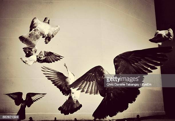 Pigeons Flying In Different Directions