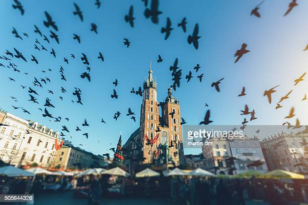 Pigeons flying over Cracovia a la ciudad