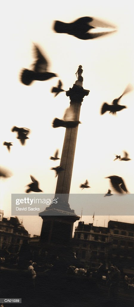 Pigeons in Flight - London, England : Stock Photo