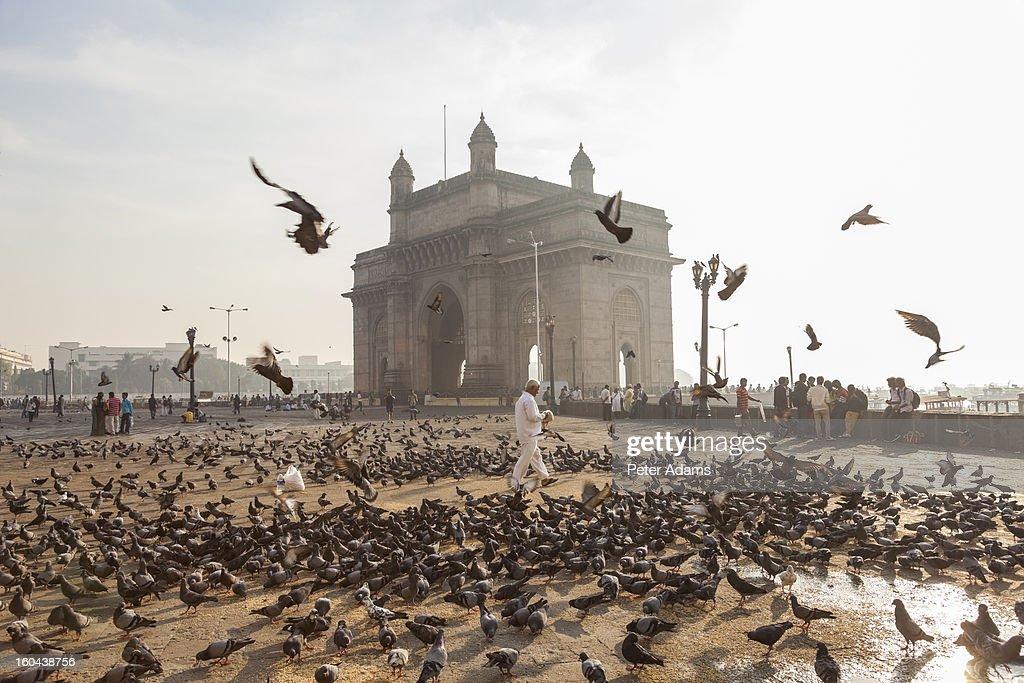 Pigeons, India Gate, Colaba, Mumbai, India : Stock Photo