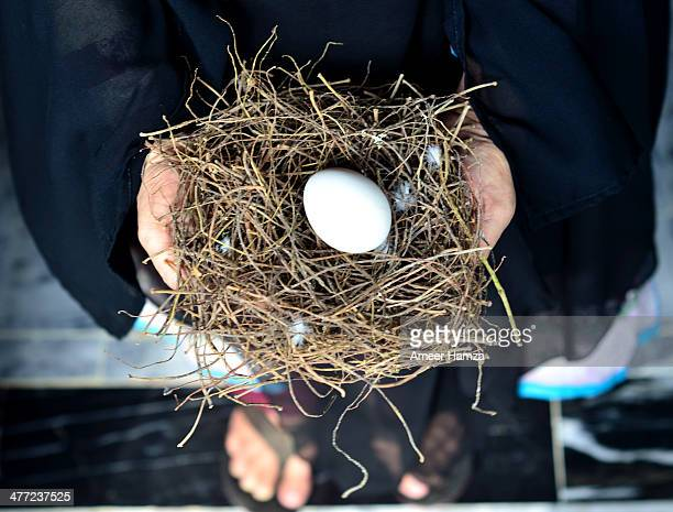 Pigeon's nest with chicken egg !