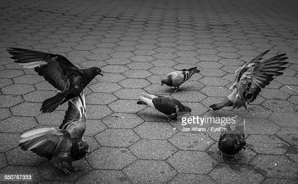 Pigeons On Paving Stone Street