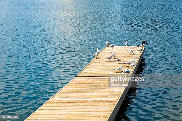 Pigeons perching on a pier, Altamonte Springs, Orlando, Florida, USA