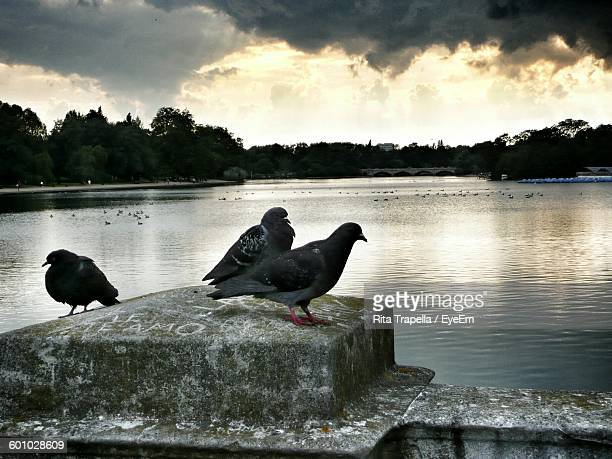 Pigeons Perching On Retaining Wall At Lake Against Cloudy Sky